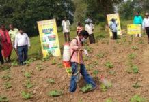 nano fertiliser being used in farm