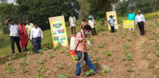 nano fertiliser being used in farm